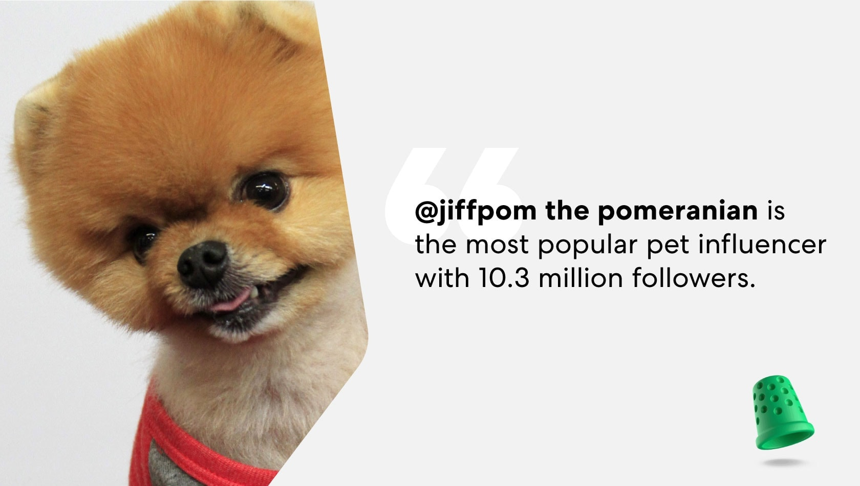jiffpom-most-popular-pet-influencer