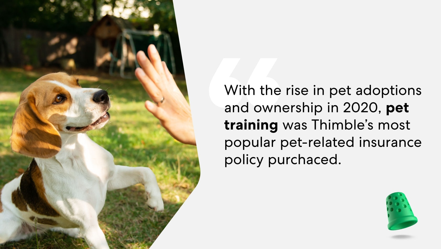 pet-training-insurance-policy